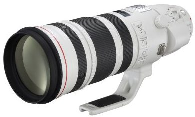 Best Canon Lens for Wildlife Photography